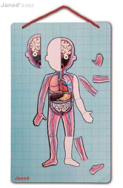 Magnetyczna układanka ciało człowieka Magnetibook, Janod 8670