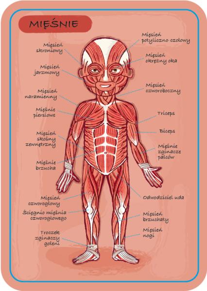 Magnetyczna układanka ciało człowieka Magnetibook, Janod 8678